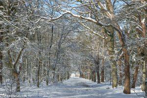 winterfoto van een pad in het bos, met vers gevallen sneeuw