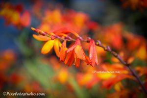 foto van orange bloemen