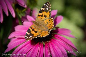 foto van een mooie vlinder die op een bloem zit