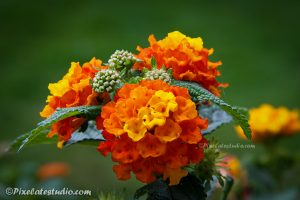 foto van een bloem in de tuin