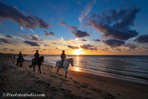 foto van Paarden aan het strand