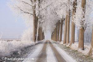 Rijp op de bomen in de winter