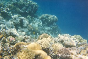 foto van het koraal in de rode zee