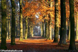 Mooie herfstfoto