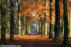 Herfst foto's , herfst in het bos