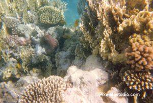 onderwaterfoto van het koraal