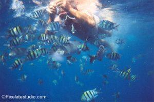 onderwater foto van tropische vissen