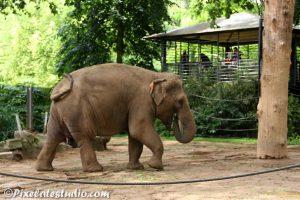 foto van een olifant