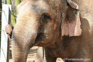 Dierentuin foto van een olifant