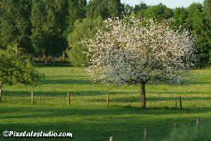 mooie foto van boompje dat in bloei staat