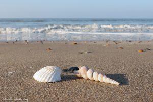 Stilleven van schelpen op het strand, mooie foto van een stilleven van schelpen op het strand